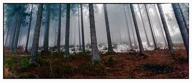 magic forest !