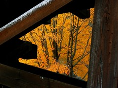 Autumnal Color Through the Trestle | by Vicki's Pics