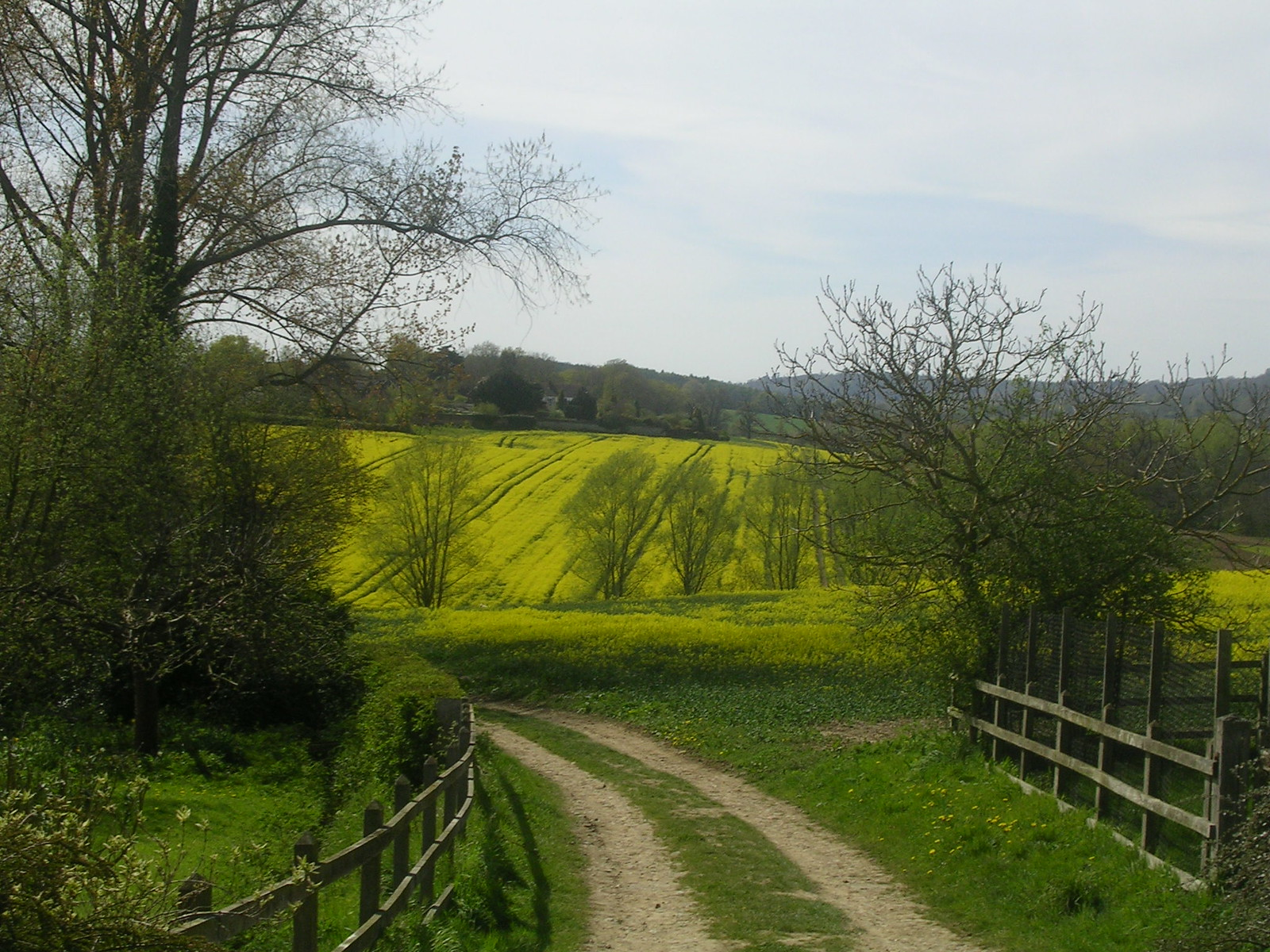 Yellow view Yalding to Sevenoaks