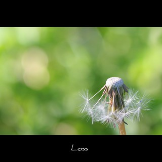 Loss (Explored) | by John-Morgan