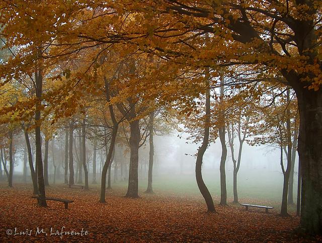 Bosque de Hayas - Otoño