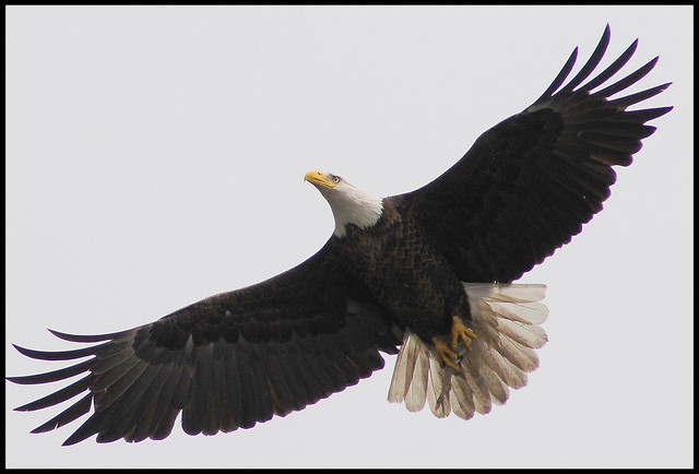 027  The Bald Eagle Adventure Is Completed