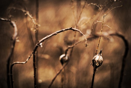 still life plant dead landscape abstract bokeh warm columbus ohio sony alpha a6000 minolta rokkor 50mm