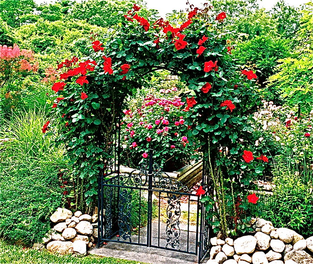Rose Arch