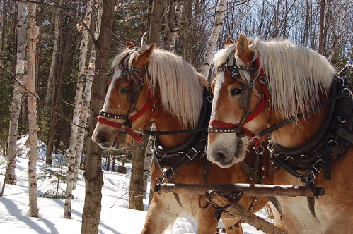 Horses | by Bonnie-K