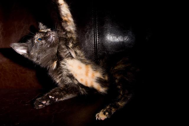 Kitty 7517