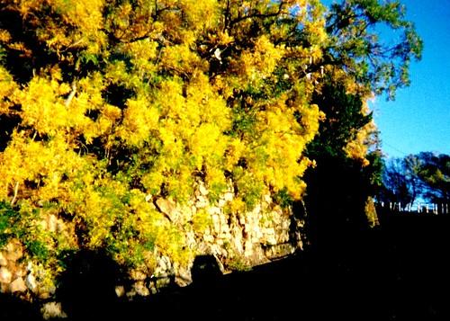 travel autumn arizona usa film america sunrise golden highway 110 jerome ash 1998 verdevalley 89a 110camera 10yearsago jeromeaz highway89a ellenjoroberts ellenjdroberts photoalbumfavorites ellenjocom