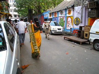 Sacred Cow in Mumbai | by betta design