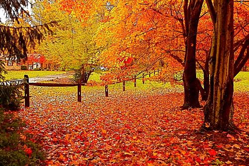 autumn fall colors leaves landscapes scenery maryland breathtaking southernmaryland calvertcountymaryland mywinners leicadlux3 platinumphoto anawesomeshot naturewatcher colorartawards goldstaraward huntingtownmaryland ourmasterpieces showmeyourqualitypixels