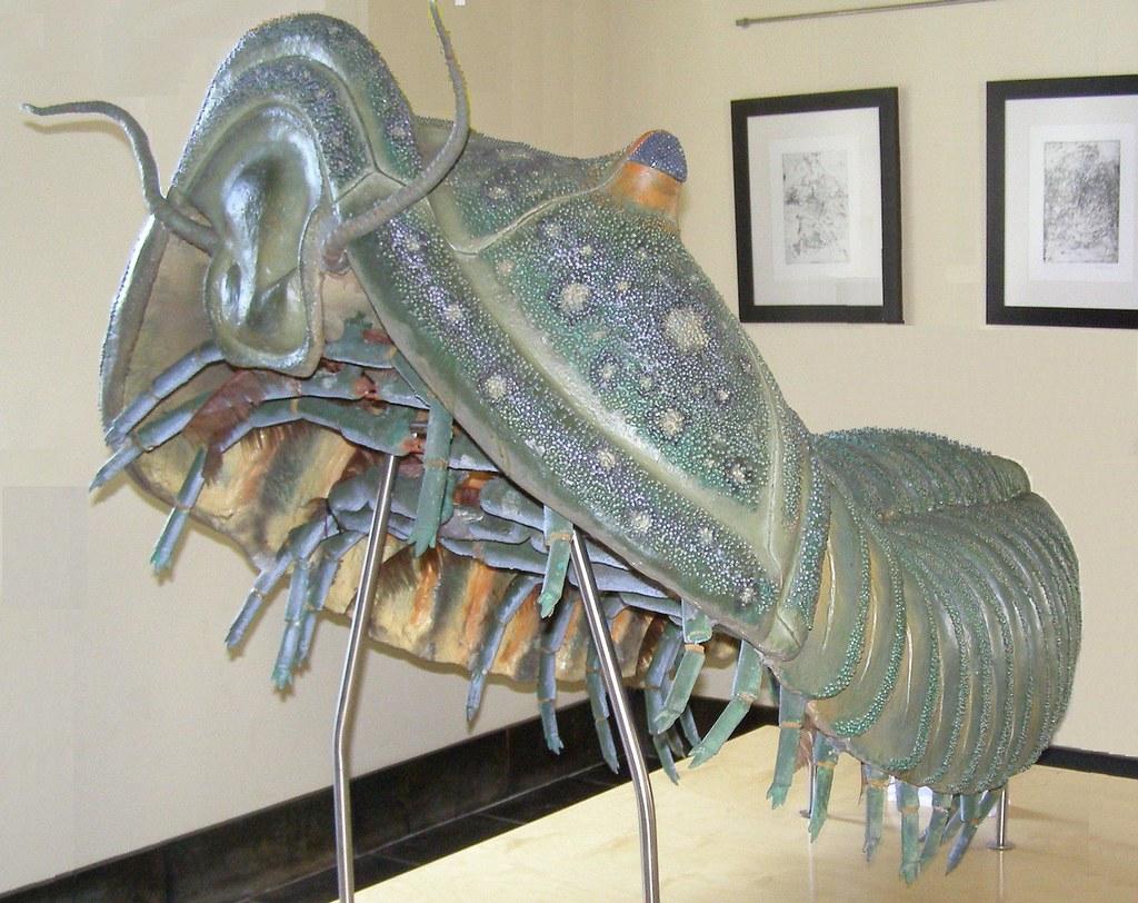 Maqueta de trilobite gigante para frikis :-) - a photo on