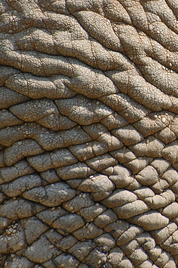 real elephant skin, texture for layer | real elephant skin