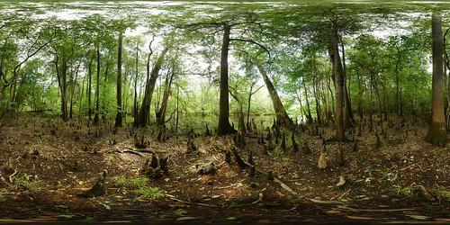 park panorama lake tree monument geotagged pano 360 national cypress knee weston congaree equirectangular geo:lat=33820938 geo:lon=80816287