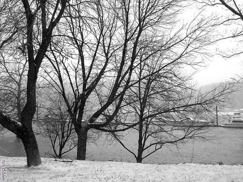 winter blackandwhite bw snow cold tree water landscape boat dock scenery flood huntington wv westvirginia snowing ohioriver harrisriverfrontpark huntingtonwv rcvernors