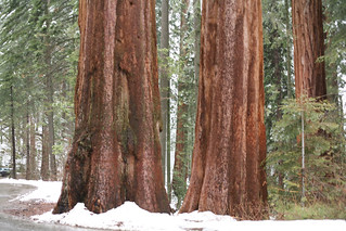 Sequoia_National_Park - 11 | by Steve's Web Hosting