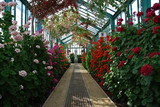 Le tunnel de verre et de plante (Serres Royale de Laken -Bruxelles) | by Flikkersteph -5,000,000 views ,thank you!