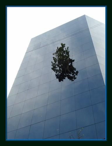 Edificio Telcel