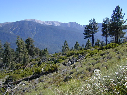 San Bernardino National Forest