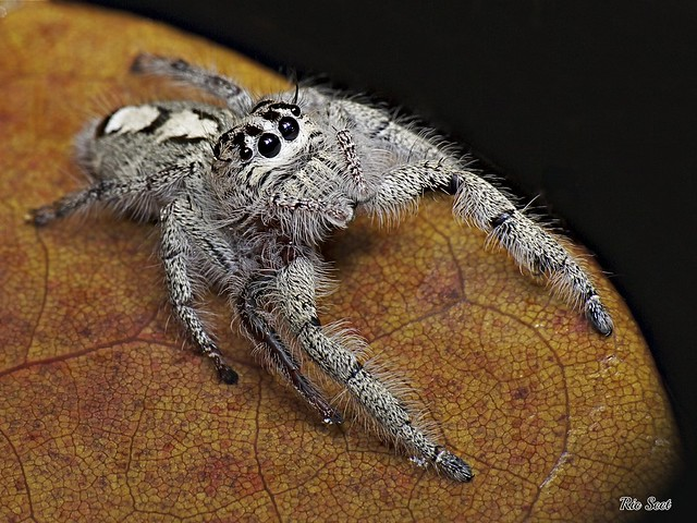 Dedicated to Luis: The Adorable Big Jumper