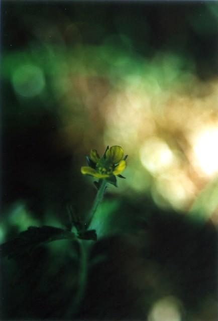 llandudoch walk herb bened