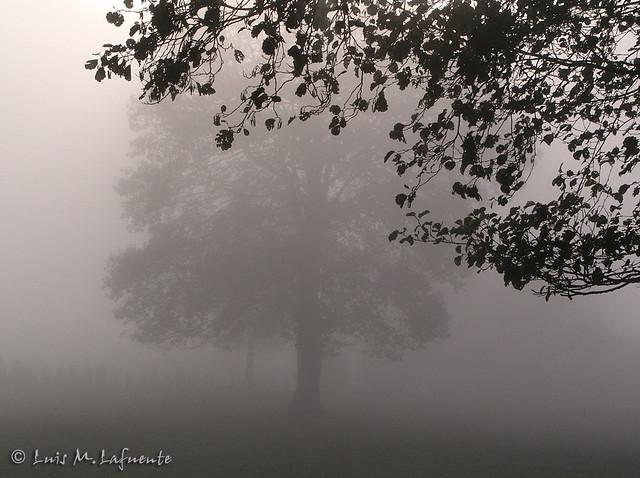 Bajo la niebla -