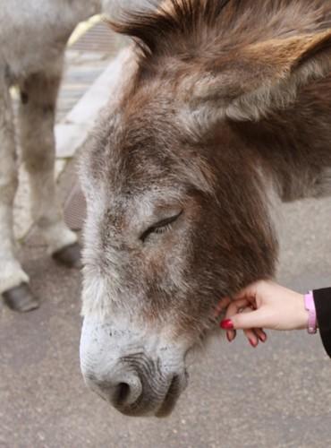 Beaulieu Donkeys | by Hexagoneye Photography