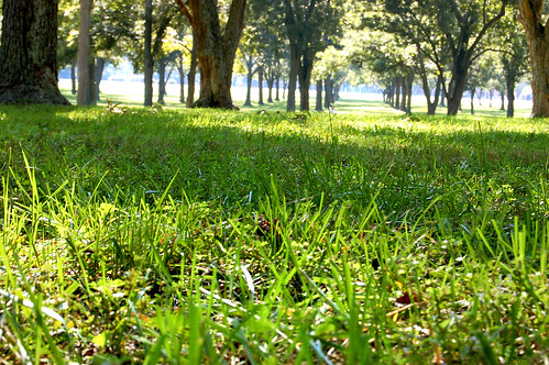 trees usa green grass campus virginia grove formal petersburg wm va williamandmary planting pecans rbc juniorcollege dinwiddiecounty richardblandcollege