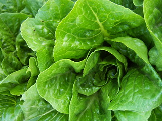 Crunchy Romaine Lettuce | by Lawrence Farmers' Market