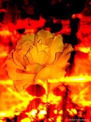 Flower In Fire