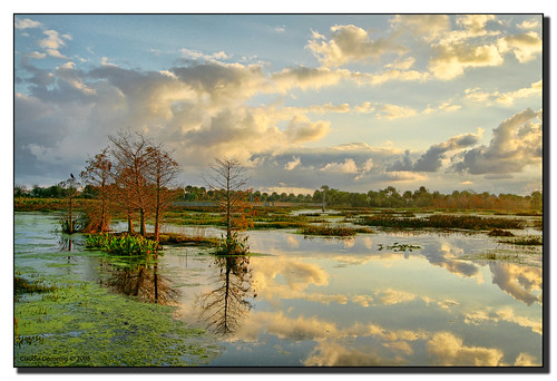 morning trees reflection water clouds mirror florida wetlands jpeg hdr boyntonbeach canonefs1022mmf3545usm naturesfinest photomatix supershot 3exp flickrsbest platinumphoto greencaywetlands anawesomeshot superbmasterpiece diamondclassphotographer flickrdiamond dphdr palmbeachco