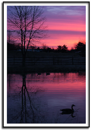 sunrise 50mm geese pond f32 50mmlens