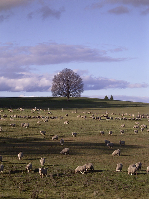 Tree 2 june 2003