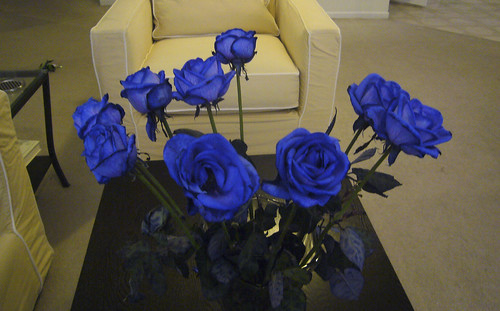 Blue roses | by Kent Wang