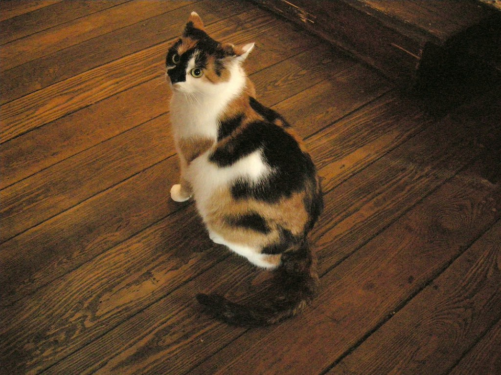Pub cat