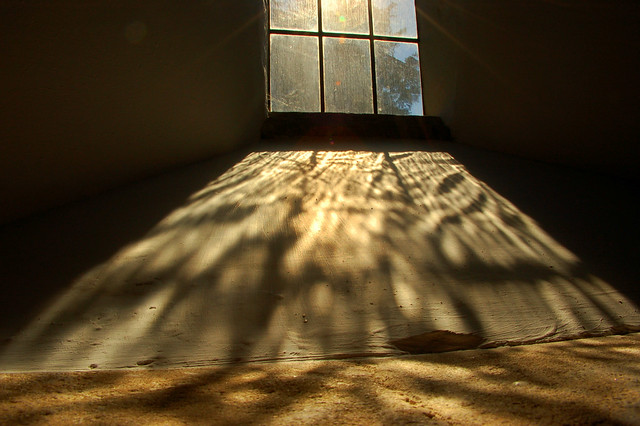 THE LIGHT FROM THE WINDOW