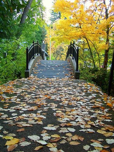 bridge autumn fall colors leaves oregon parks ashland lithia