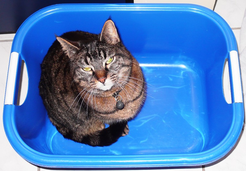 Tabby in bath