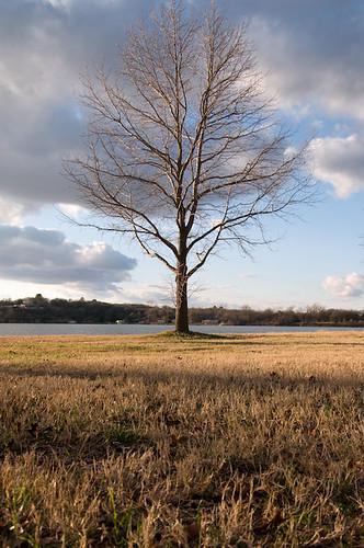 lake tree grass geotagged texas unitedstates fortworth lakeworth geo:lat=3281425100 geo:lon=9745146900