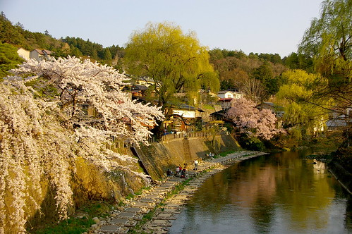 flowers trees sunset flores rio japan river arboles riva arbres cherryblossom sakura nippon puestadesol takayama calma nihon japó hida fleuve orilla vespre riu miyagawa japón cirerers 高山市 cerezos florit aplusphoto colourartaward