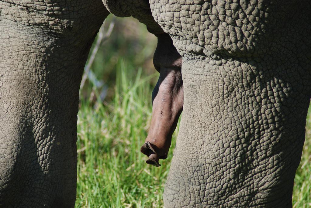 Rhino nude