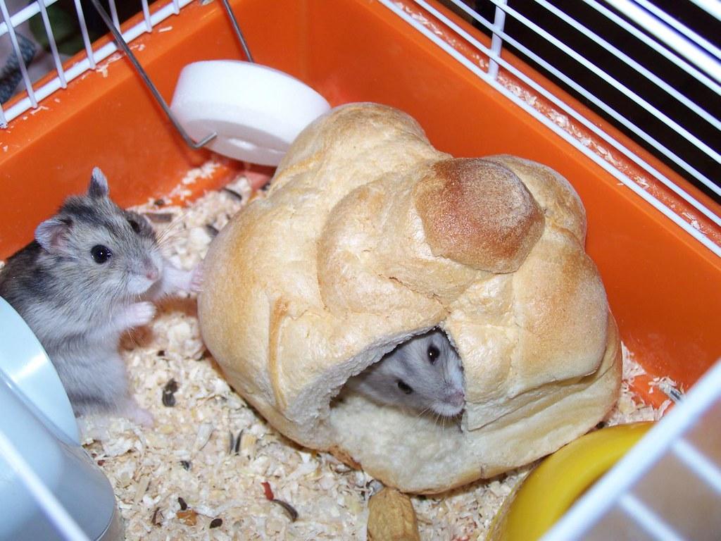 Hamster Sandwich 02 | Formaggino qui ha la faccetta un po