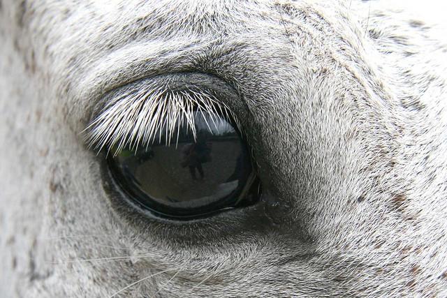 Horse-aye