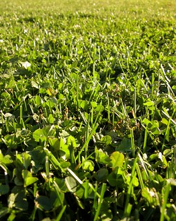 Grass and clover | by Jason-Morrison