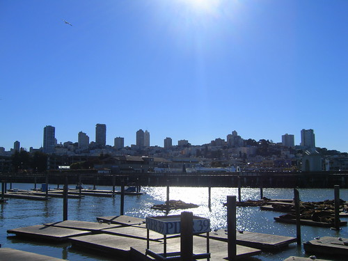 Sea lions at Pier 39 and a view of the north end of the city | by PatrickRohe