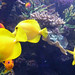 London Aquarium & Southbank, England