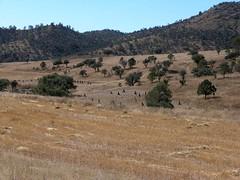Harvest - Cosecha; Camino entre Guanacevi & La Cienega de Escobar (N de Santiago Papasquiaro), Durango, Mexico