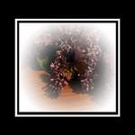 Lilac Memories 2