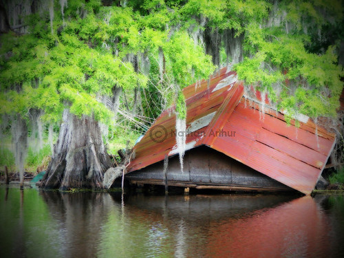 plant reflection tree abandoned nature water photoshop landscape outdoors canal moss rust rustic shed norton bayou swamp airline cypress boathouse 61 ibeauty
