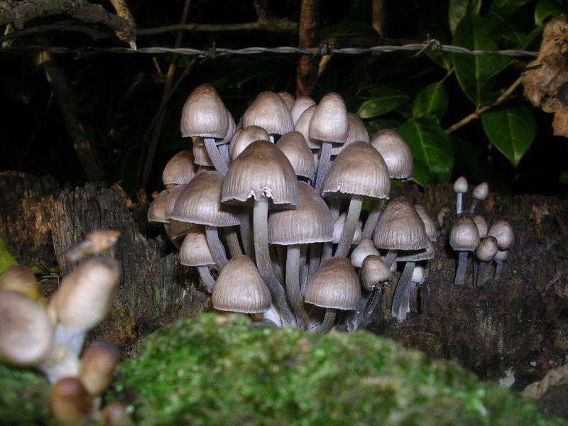 Fungi Sevenoaks circular