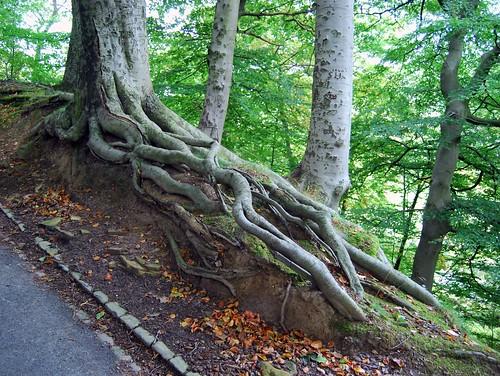Tree Root | by Tim Green aka atoach