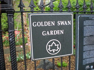 Golden Swan Garden | by erick-d